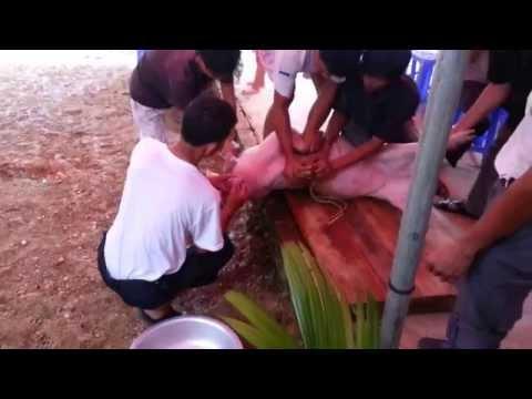 Cận cảnh thịt lợn Mường Khương - Lào Cai 20130726