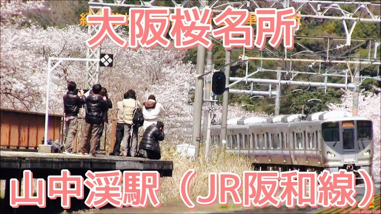 JOBBB090228 JR阪和線 山中渓駅 春の景色 JOBBB090228  JR阪和線 山