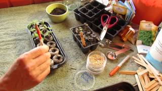 How To Grow/Start Tomato Seeds Indoors In Peat Pellets