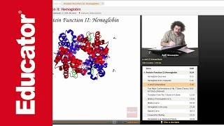 """Protein Function: Hemoglobin"" 