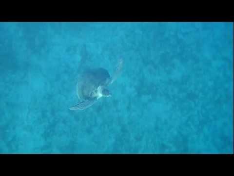 Nazar encounters a Turtle