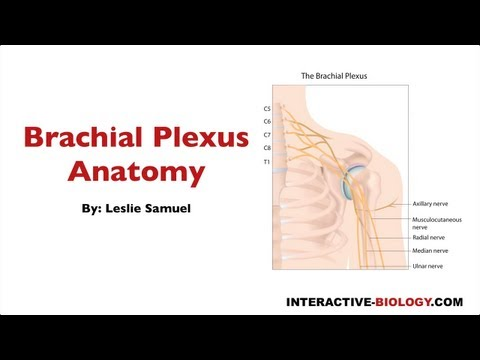 092 Brachial Plexus Anatomy