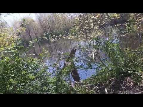 Metal Detecting - 1800's Swimming hole