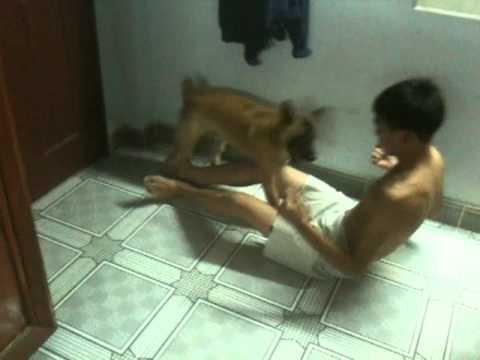 đánh nhau với chó