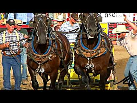 Belgium and Clydesdale Heavy Draft Horse Pull - [HD]