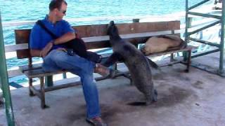 Galapagos Sea Lion Wants Seat on Bench