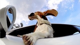 GoPro: The Dog and The Porsche