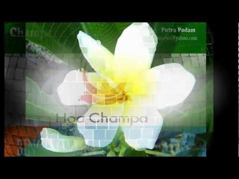 Hoa Champa và vương quốc Champa