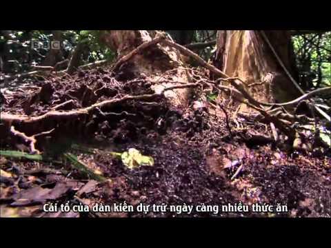 [BBC.Natural.World] Ant.Attack- cuoc tan cong cua loai kien