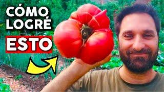Trucos para cultivar tremendos tomates