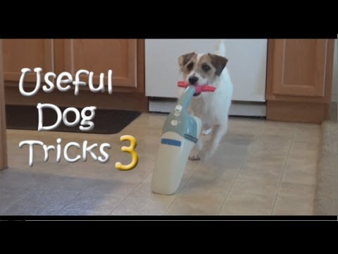 Useful Dog Tricks 3 performed by Jesse