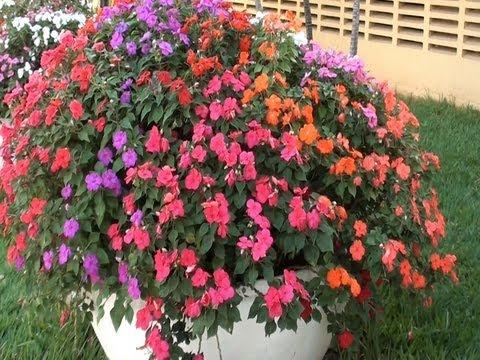 Floreiras, Vasos, Impatiens walleriana, Plantas ornamentais, Natureza, biodiversidade,