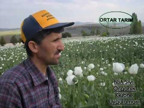 Ortar Tarım B5A Sıvı Organik Gübre Uygulaması Kütahya