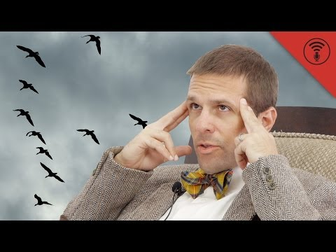 Why Do Geese Fly in a 'V' Formation? - Don't Be Dumb