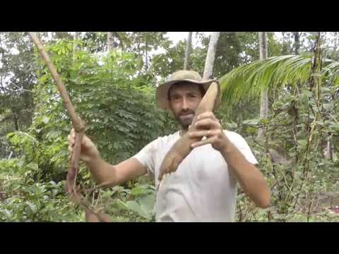 Tapioca / Cassava - Super Easy to Grow  Here In Kerala India - Here is How!