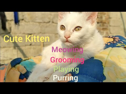Cats Meowing | Cats playing | Cats Grooming | Funny Pet Videos | Funny Cat Videos