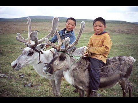 Cuộc Sống Thường Ngày Của Làng Chăn Nuôi Tuần Lộc Ở Mông Cổ