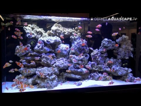 Aquarium Ideas from InterZoo 2012 - part 1