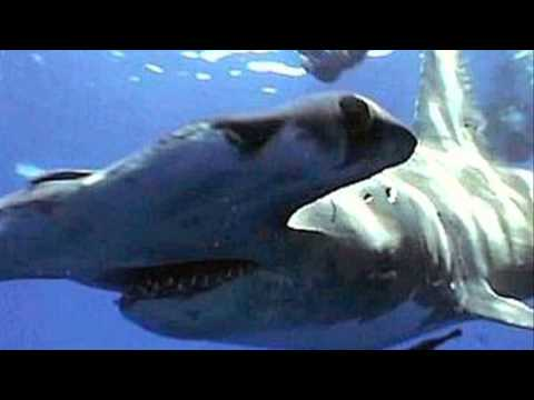 Types of pet sharks