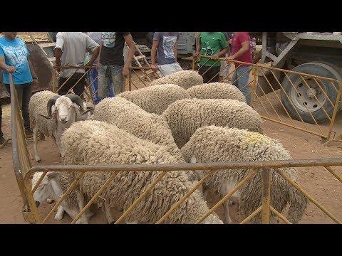 عيد الأضحى .. إقبال متزايد على الأسواق لاقتناء أضحية العيد