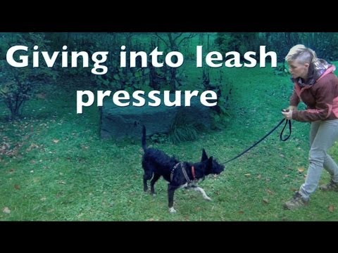 Giving into leash pressure- clicker dog training shy reactive dogs