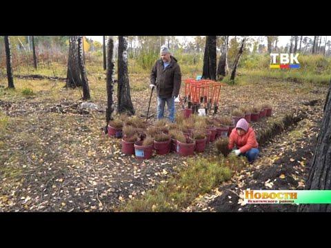 На месте сгоревшего леса под деревней Евсино добровольцы садят новый