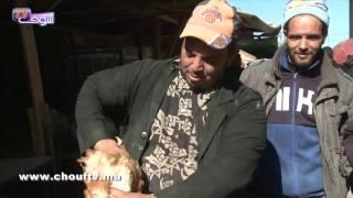 هام للمستهلكين المغاربة:من قلب سوق الدواجن بالبيضاء ..هذه حقيقة إصابة الدجاج ''الكروازي'' بفيروس الانفلوانزا | روبورتاج