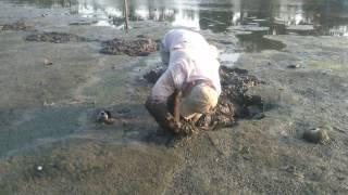 0178 Cận cảnh bắt lươn ruộng (lịch) và món lươn chiên giòn - Catching eels with bare hands
