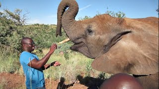 [Taking An Elephant For a Walk] Video
