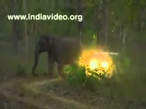 Kerala elephant attack youtube - photo#7
