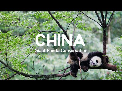The Giant Panda Conservation Project