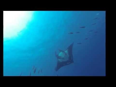 GoPro: World Oceans Day 2014