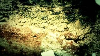 CRS - Fariseos (Lyric Video)