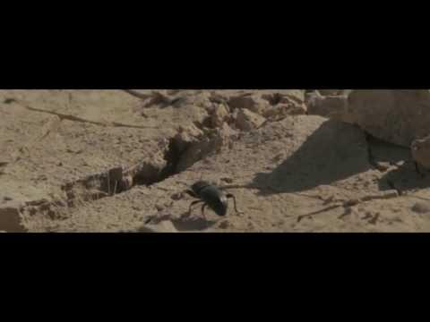 Xenon - Bienvenidos al desierto