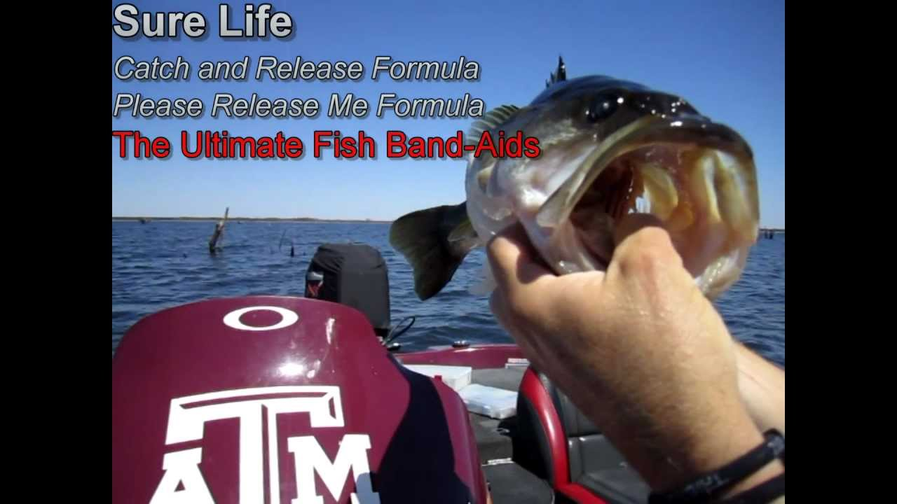 Bass Fishing Tips - How to Save a Fish's Life