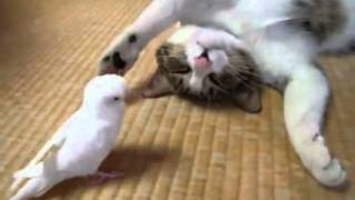 Cat Playing with a Bird