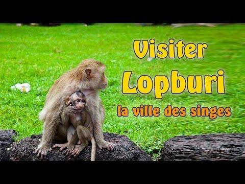 visiter lopburi, la ville des singes