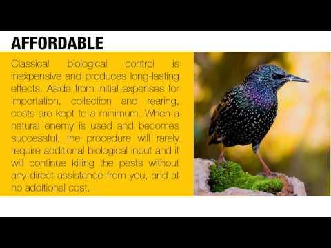 The Advantages of Biological Pest Control