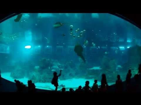 Du lịch Singapore - Đại dương- nhân tạo - Thủy cung lớn nhất thế giới