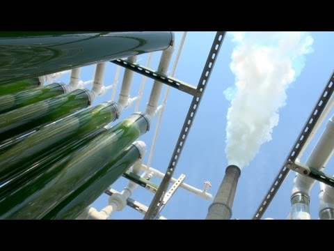Algae CO2 Capture at the University of Kentucky: Part 1
