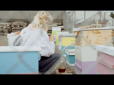 How a college uses Flow Hive to pollinate crops and feed its students (video)