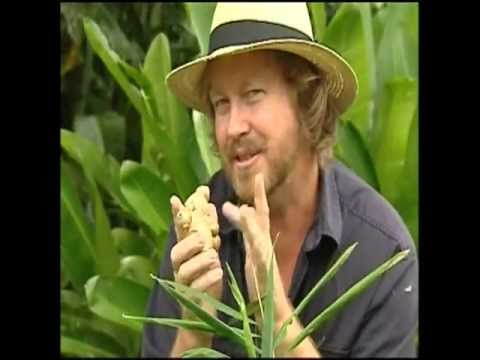 Vegetable Gardening: Growing Edible Ginger - How to Grow Ginger -QJCnfjIrBRo