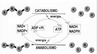 Biología - Metabolismo
