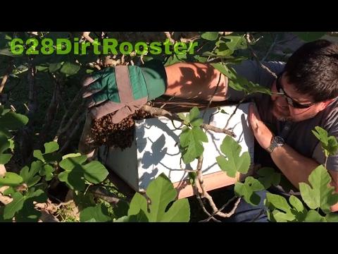 Fig Tree Swarm