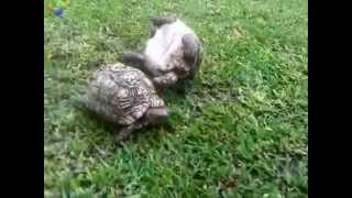 Tortoise helps friend who's flipped over ♥
