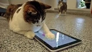 Cool Cats Playing On iPads Compilation