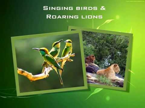Watching Wildlife - Gavi - South India Tour Operator