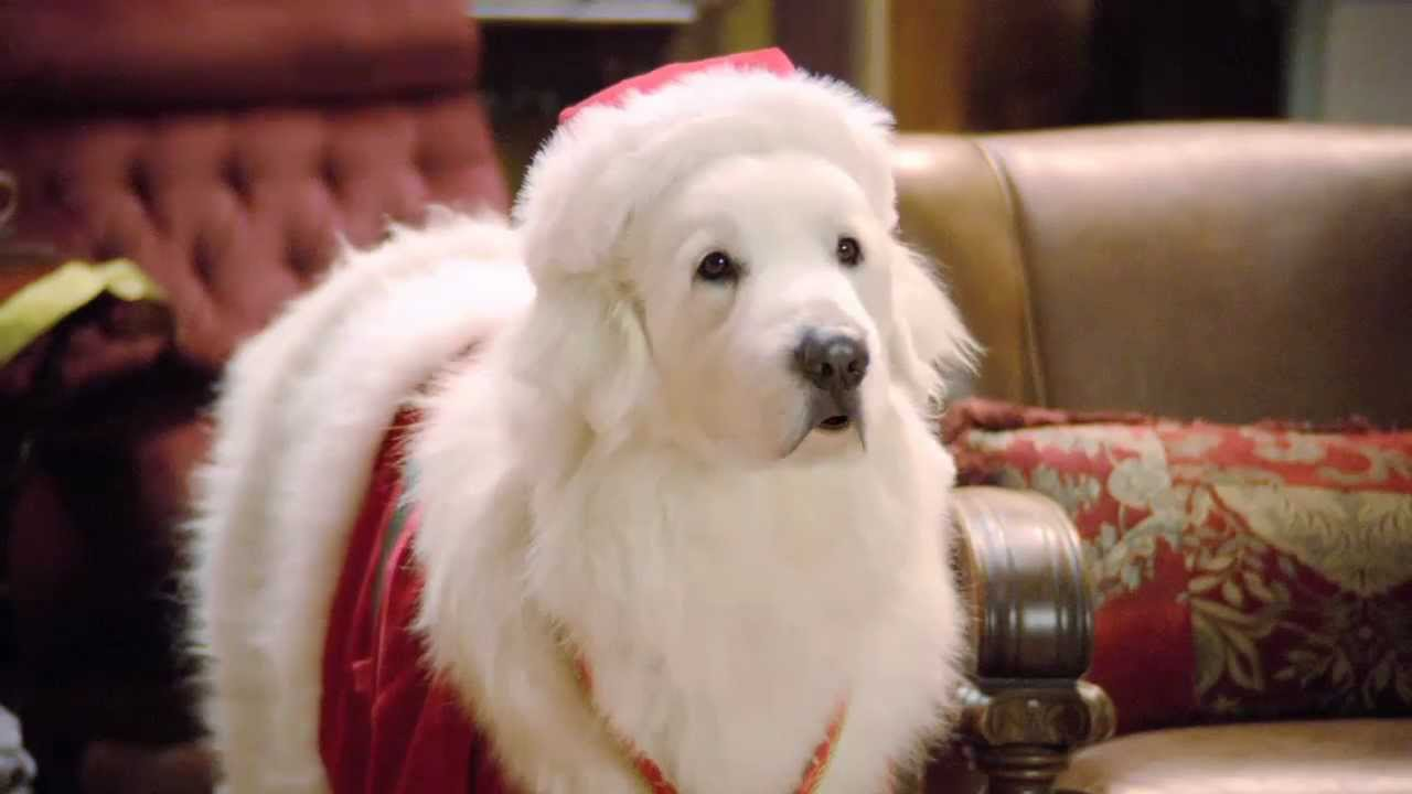 What Kind Of Dog Is Santa Paws