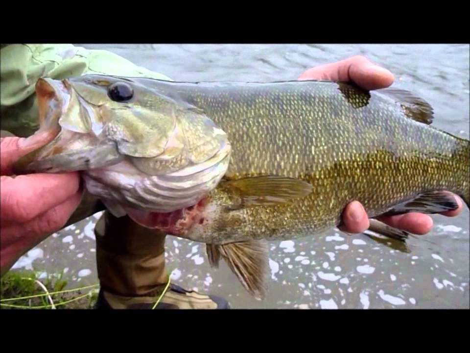 Stream brook fly fishing smallmouth bass 101 youtube for Smallmouth bass fly fishing