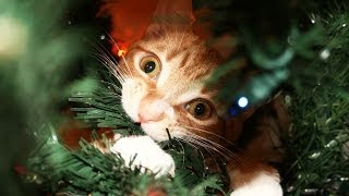 A Cat's Guide to Christmas!